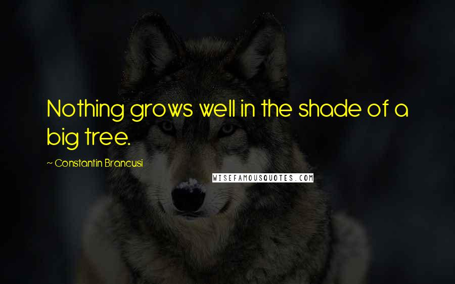 Constantin Brancusi quotes: Nothing grows well in the shade of a big tree.