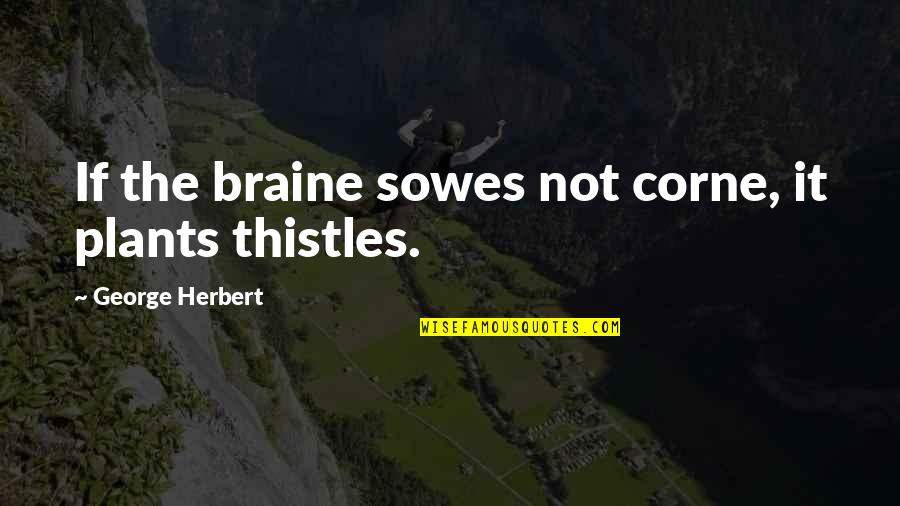 Corne Quotes By George Herbert: If the braine sowes not corne, it plants