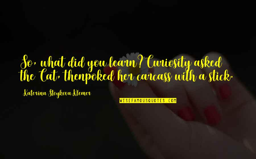 Curiosity And Cat Quotes By Katerina Stoykova Klemer: So, what did you learn?Curiosity asked the Cat,