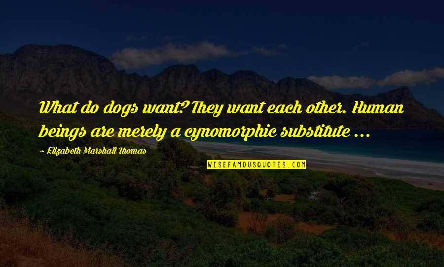 Cynomorphic Quotes By Elizabeth Marshall Thomas: What do dogs want? They want each other.