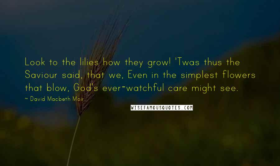 David Macbeth Moir quotes: Look to the lilies how they grow! 'Twas thus the Saviour said, that we, Even in the simplest flowers that blow, God's ever-watchful care might see.