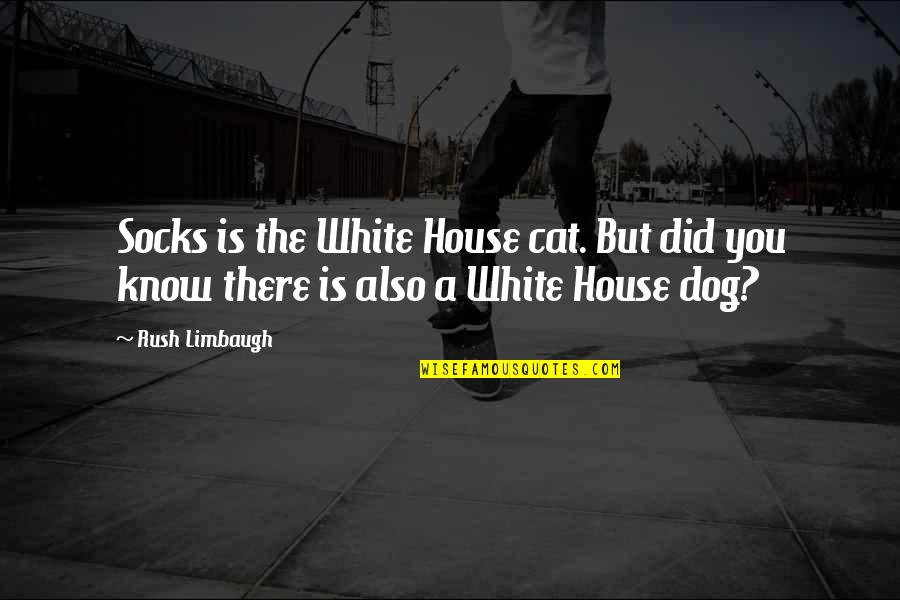 Dog Cat Quotes By Rush Limbaugh: Socks is the White House cat. But did