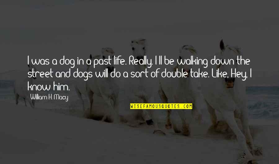 Dog Walking Quotes By William H. Macy: I was a dog in a past life.