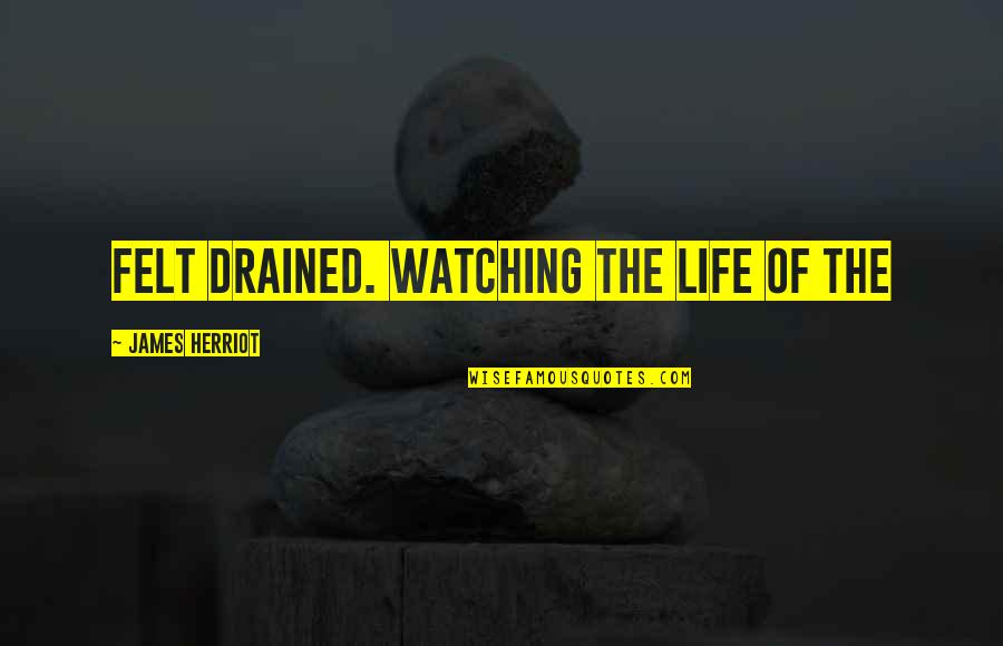 Drained Quotes By James Herriot: Felt drained. Watching the life of the