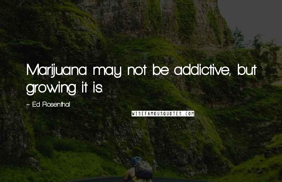 Ed Rosenthal quotes: Marijuana may not be addictive, but growing it is.