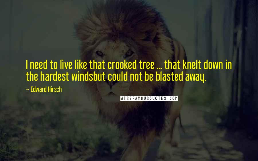 Edward Hirsch quotes: I need to live like that crooked tree ... that knelt down in the hardest windsbut could not be blasted away.