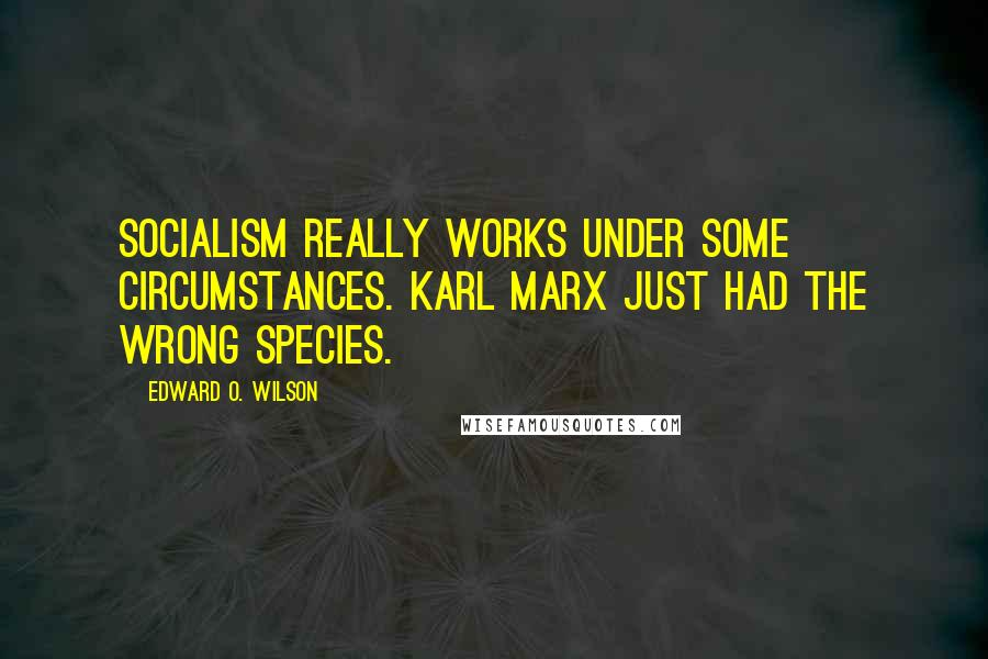 Edward O. Wilson quotes: Socialism really works under some circumstances. Karl Marx just had the wrong species.