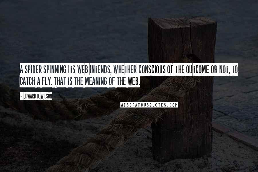 Edward O. Wilson quotes: A spider spinning its web intends, whether conscious of the outcome or not, to catch a fly. That is the meaning of the web.