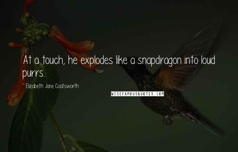 Elizabeth Jane Coatsworth quotes: At a touch, he explodes like a snapdragon into loud purrs.