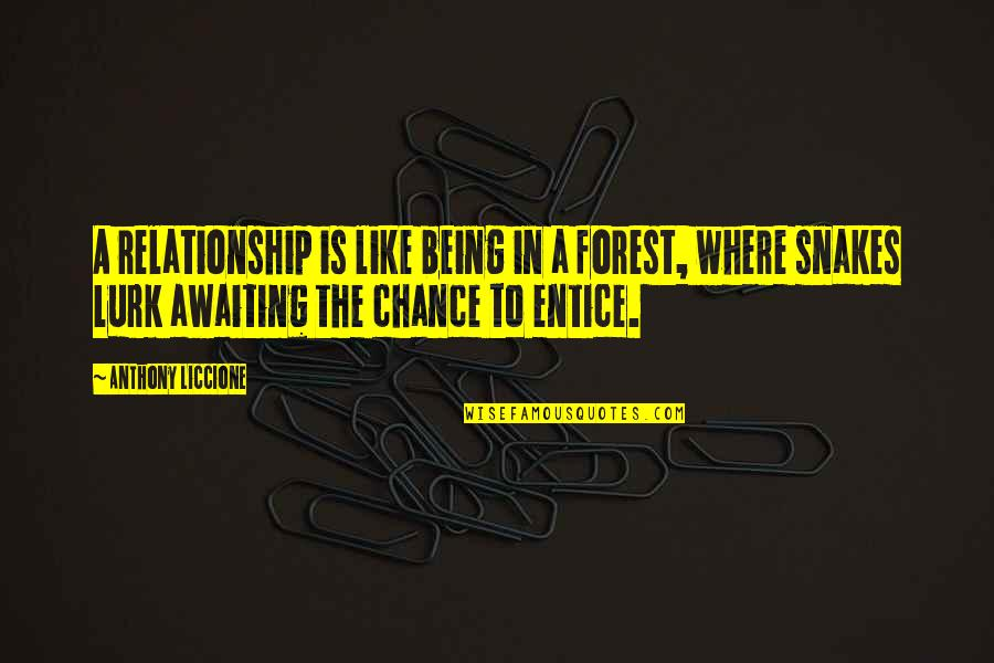 Entice Quotes By Anthony Liccione: A relationship is like being in a forest,