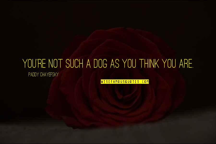 Famous Bob And Doug Quotes By Paddy Chayefsky: You're not such a dog as you think