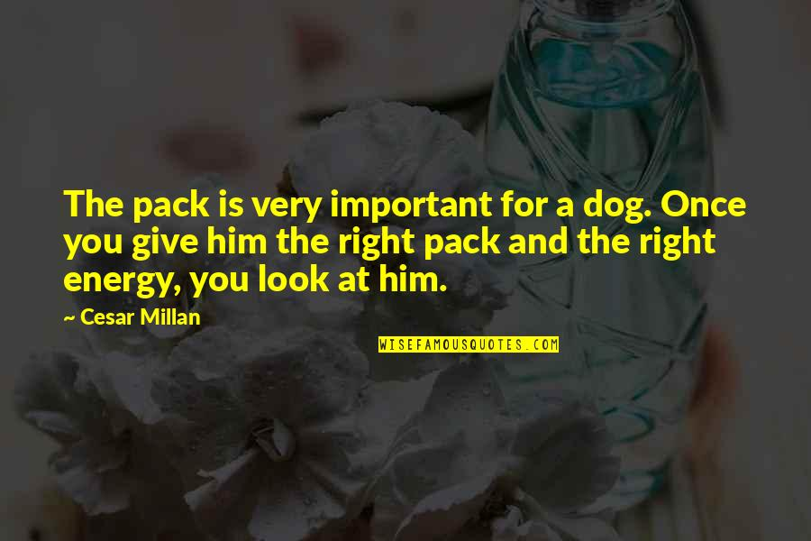 Farming Technology Quotes By Cesar Millan: The pack is very important for a dog.