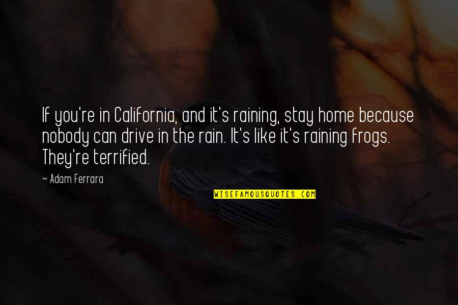 Frogs And Rain Quotes By Adam Ferrara: If you're in California, and it's raining, stay