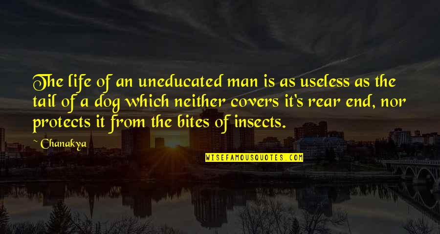 From The Dog Quotes By Chanakya: The life of an uneducated man is as