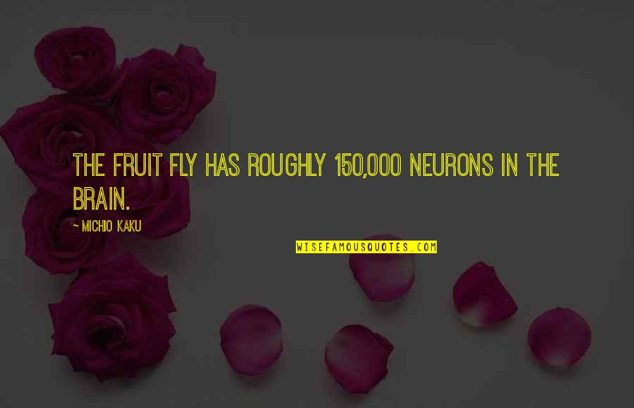 Fruit Fly Quotes By Michio Kaku: The fruit fly has roughly 150,000 neurons in
