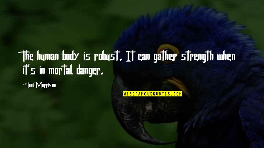 Gather'd Quotes By Toni Morrison: The human body is robust. It can gather