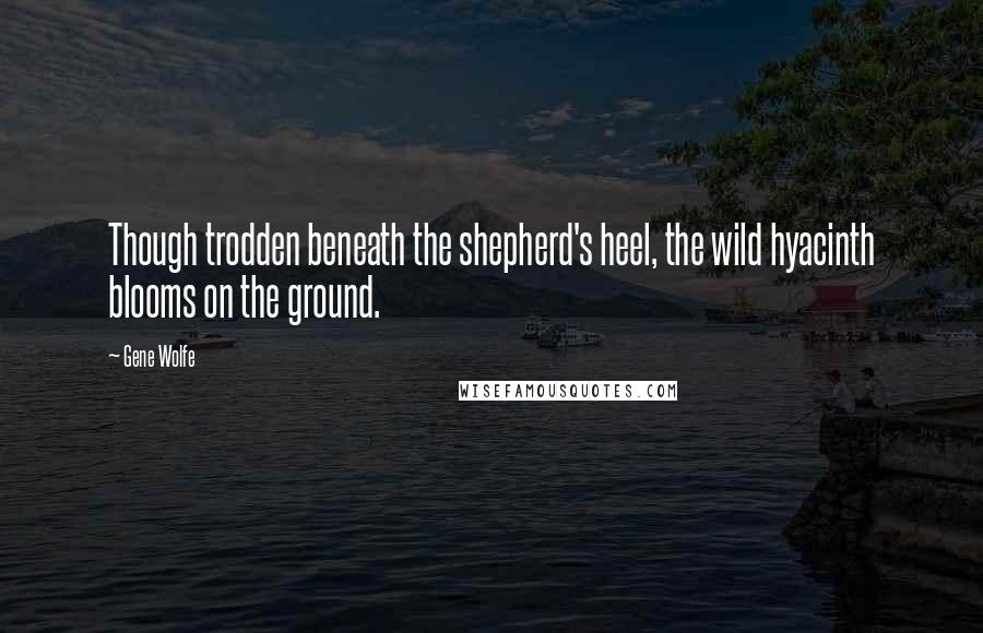 Gene Wolfe quotes: Though trodden beneath the shepherd's heel, the wild hyacinth blooms on the ground.