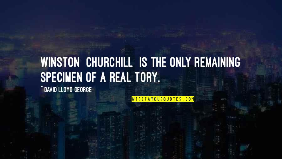 Gents Quotes By David Lloyd George: Winston [Churchill] is the only remaining specimen of