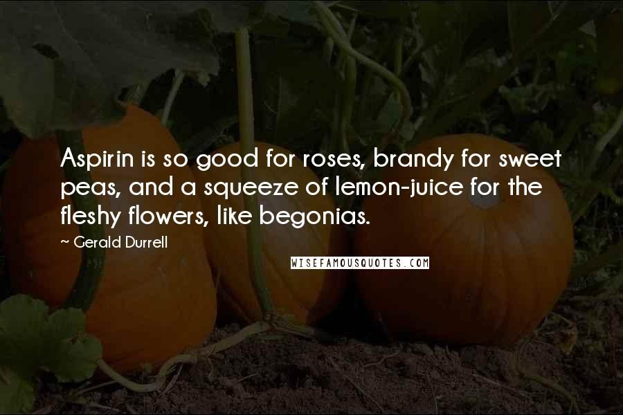 Gerald Durrell quotes: Aspirin is so good for roses, brandy for sweet peas, and a squeeze of lemon-juice for the fleshy flowers, like begonias.