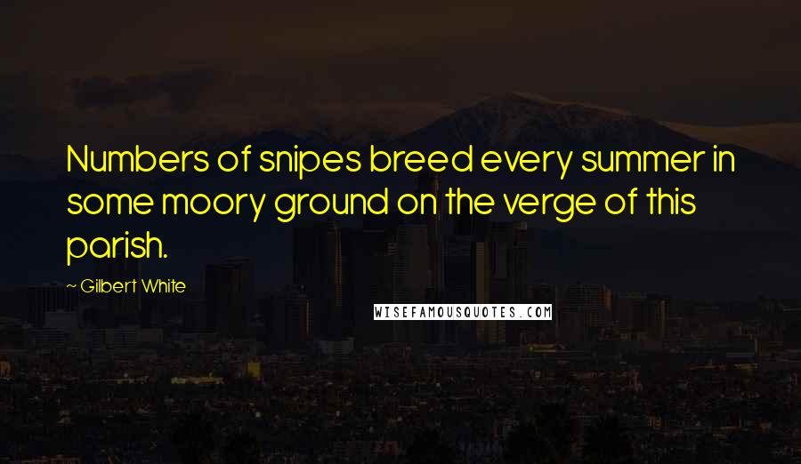 Gilbert White quotes: Numbers of snipes breed every summer in some moory ground on the verge of this parish.