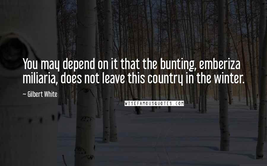 Gilbert White quotes: You may depend on it that the bunting, emberiza miliaria, does not leave this country in the winter.