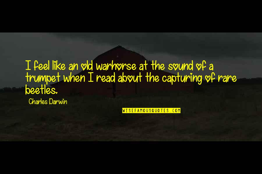 Good Baking Quotes By Charles Darwin: I feel like an old warhorse at the