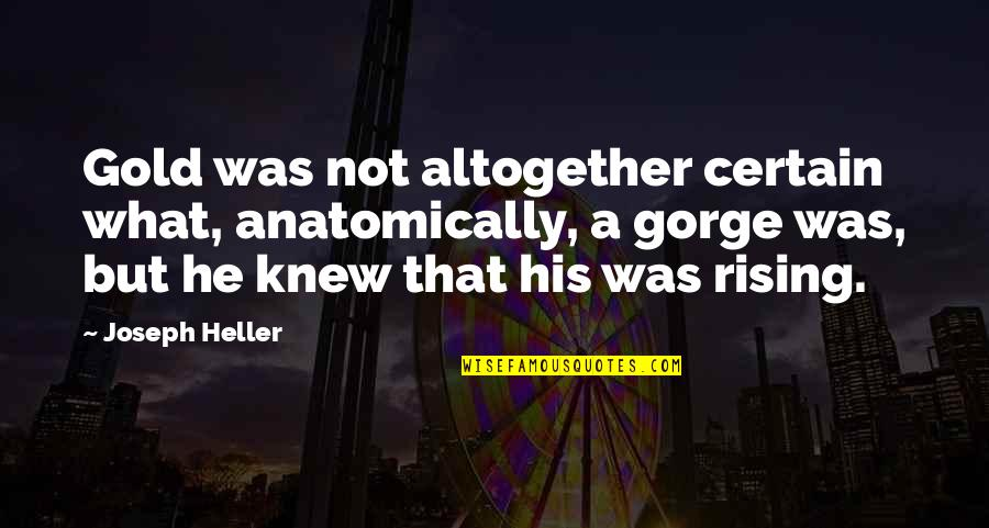 Gorges Quotes By Joseph Heller: Gold was not altogether certain what, anatomically, a