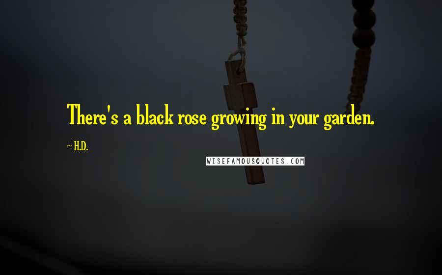 H.D. quotes: There's a black rose growing in your garden.