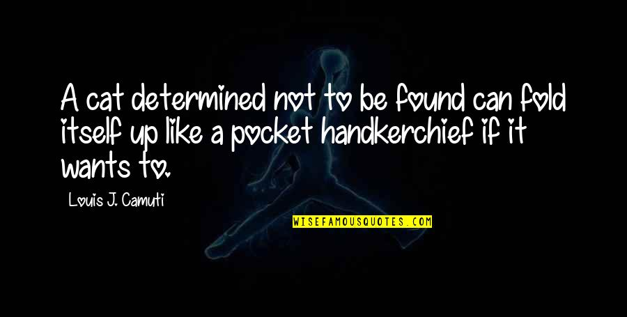 Handkerchief Quotes By Louis J. Camuti: A cat determined not to be found can