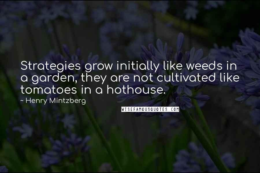 Henry Mintzberg quotes: Strategies grow initially like weeds in a garden, they are not cultivated like tomatoes in a hothouse.