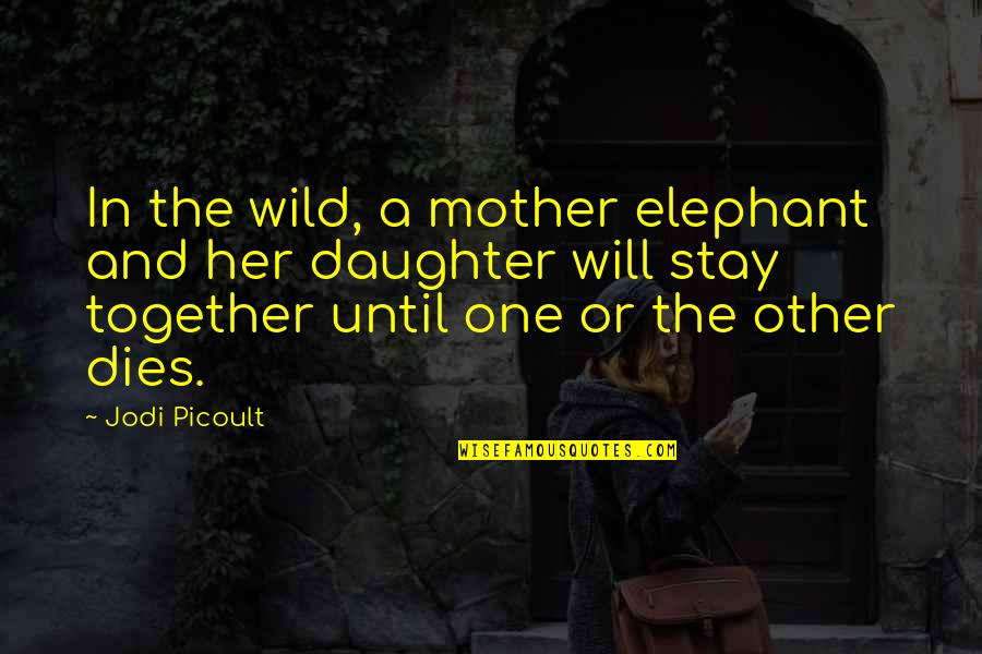 Her'daughter Quotes By Jodi Picoult: In the wild, a mother elephant and her