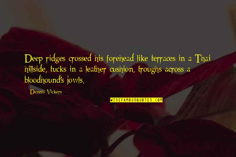 Hillside Quotes By Dennis Vickers: Deep ridges crossed his forehead like terraces in