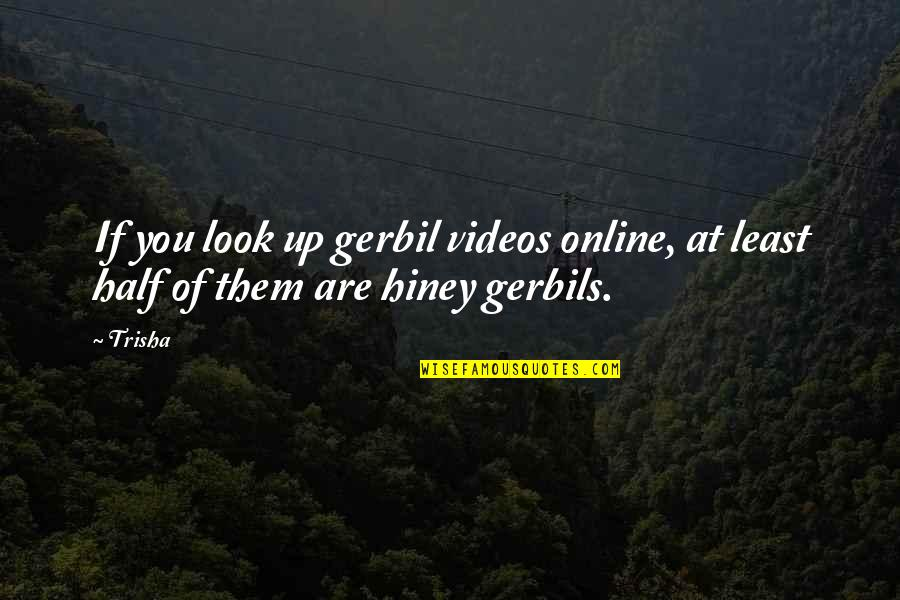 Hiney Quotes By Trisha: If you look up gerbil videos online, at