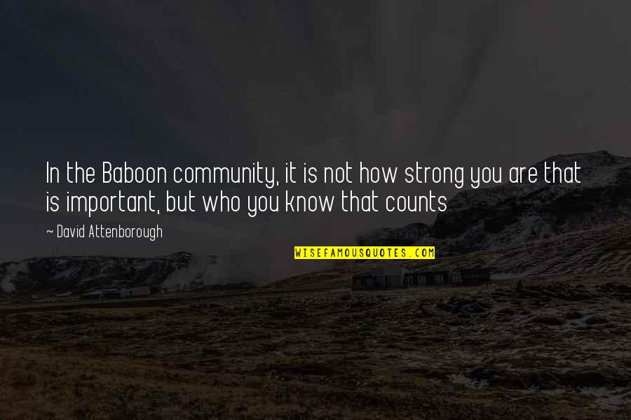How Strong We Are Quotes By David Attenborough: In the Baboon community, it is not how