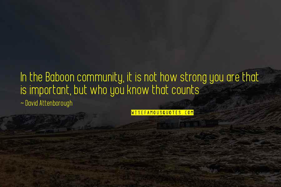 How Strong You Are Quotes By David Attenborough: In the Baboon community, it is not how