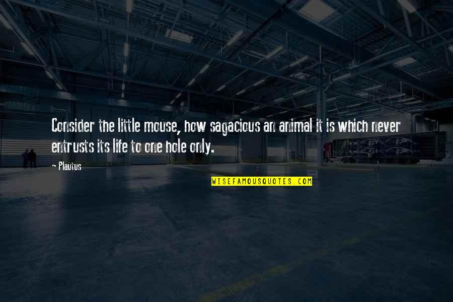 How To Success In Life Quotes By Plautus: Consider the little mouse, how sagacious an animal