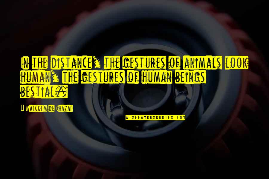 Human Vs Animal Quotes By Malcolm De Chazal: In the distance, the gestures of animals look
