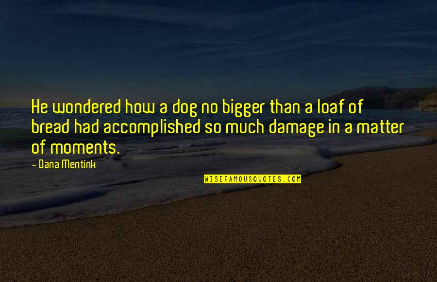 I Can't Make You Stay Quotes By Dana Mentink: He wondered how a dog no bigger than