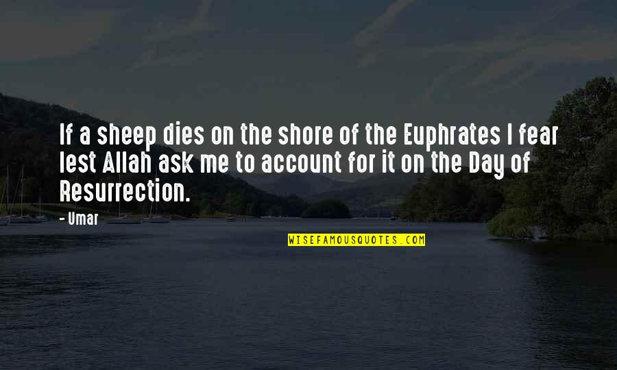 Ineffective Team Quotes By Umar: If a sheep dies on the shore of