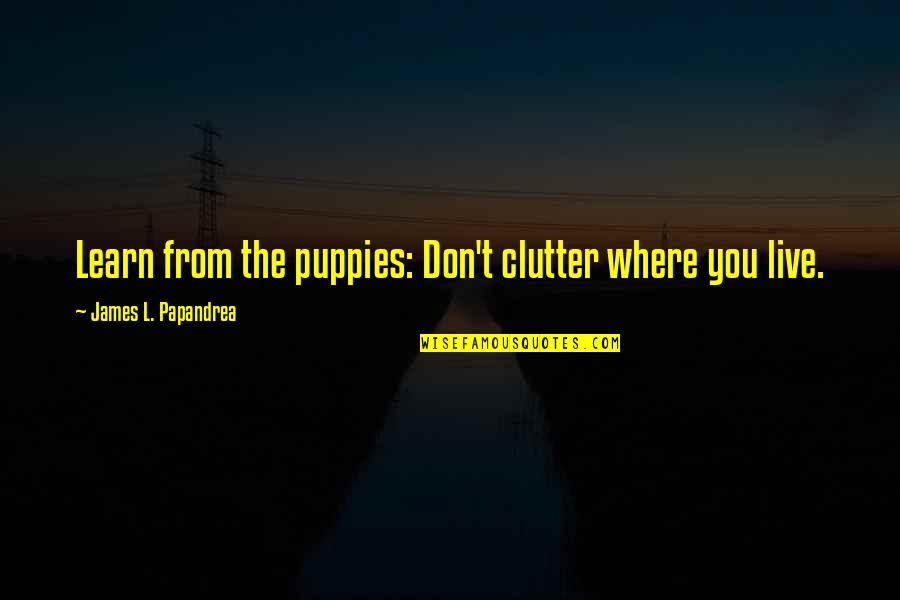 Inspirational Clutter Quotes By James L. Papandrea: Learn from the puppies: Don't clutter where you