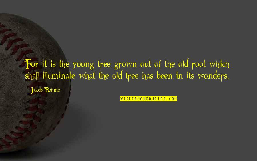 It's Been A Year Since Quotes By Jakob Bohme: For it is the young tree grown out