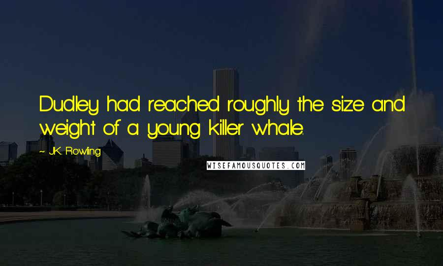 J.K. Rowling quotes: Dudley had reached roughly the size and weight of a young killer whale.