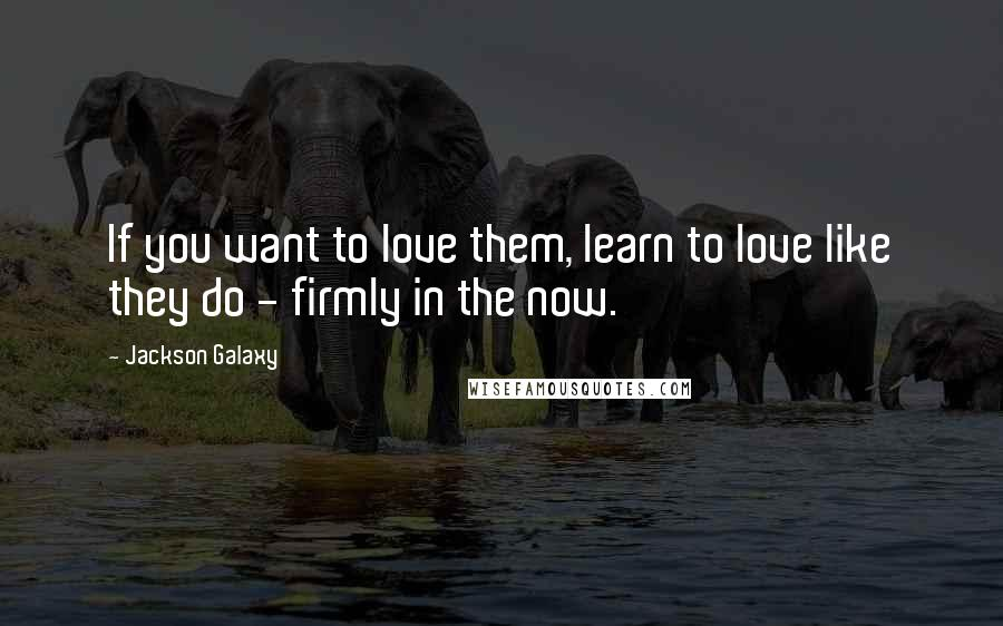 Jackson Galaxy quotes: If you want to love them, learn to love like they do - firmly in the now.