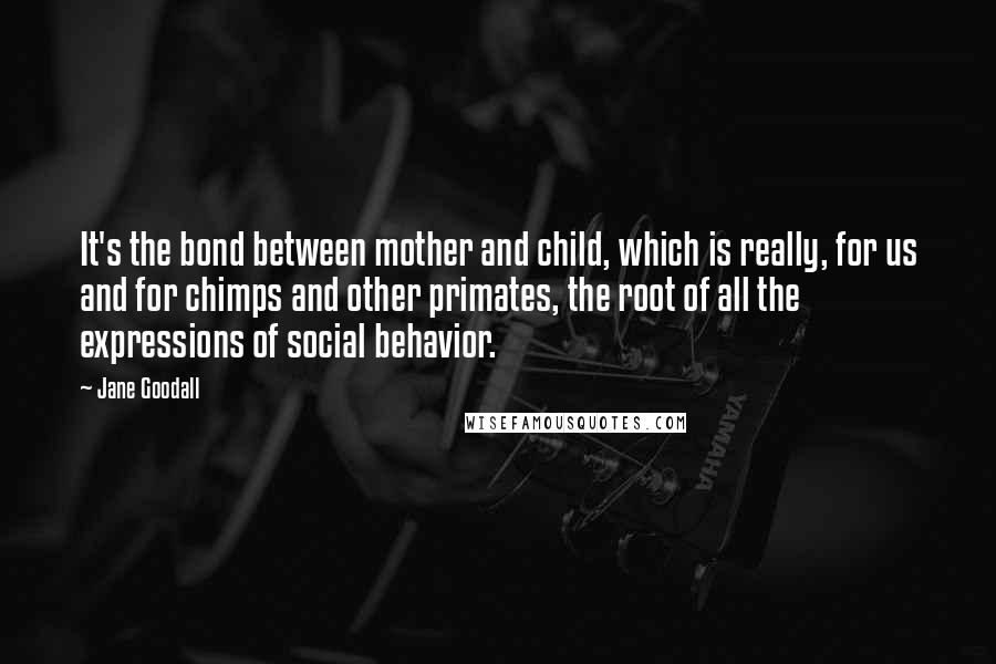 Jane Goodall quotes: It's the bond between mother and child, which is really, for us and for chimps and other primates, the root of all the expressions of social behavior.