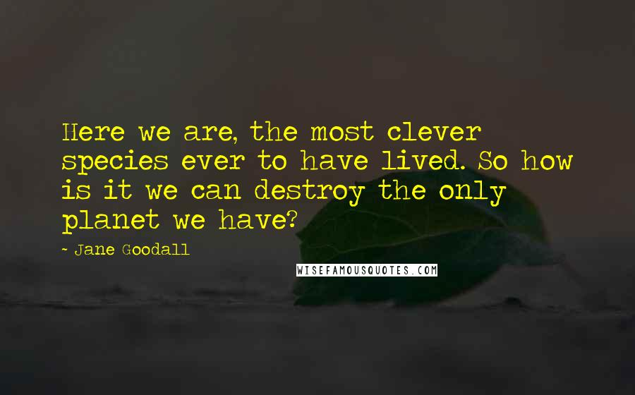 Jane Goodall quotes: Here we are, the most clever species ever to have lived. So how is it we can destroy the only planet we have?