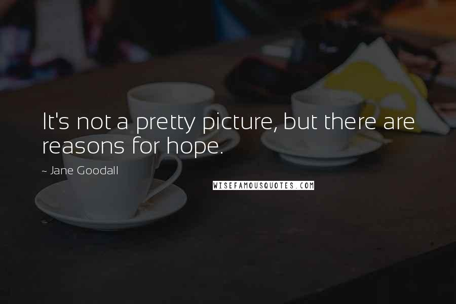 Jane Goodall quotes: It's not a pretty picture, but there are reasons for hope.