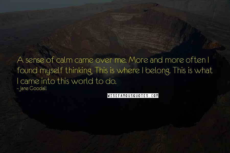 Jane Goodall quotes: A sense of calm came over me. More and more often I found myself thinking, This is where I belong. This is what I came into this world to do.