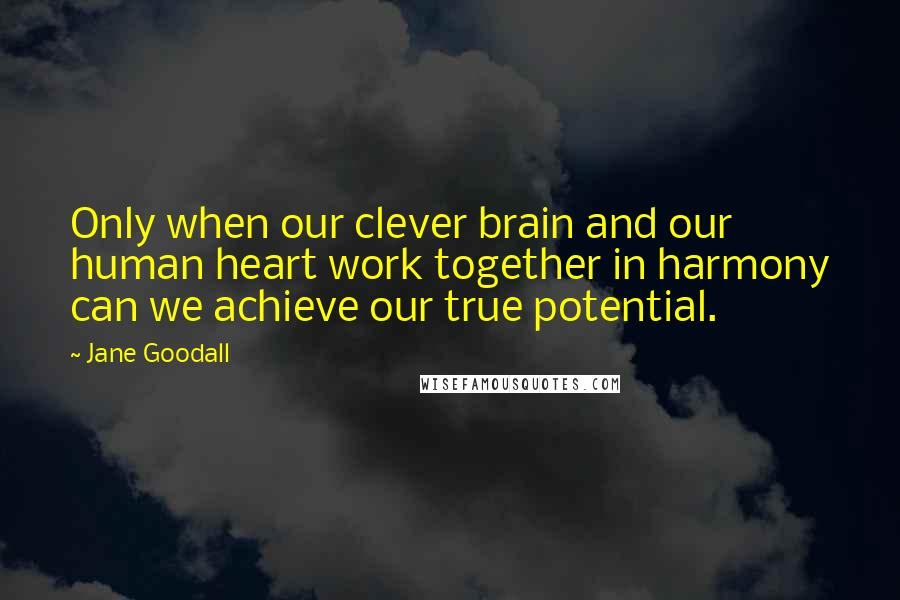Jane Goodall quotes: Only when our clever brain and our human heart work together in harmony can we achieve our true potential.
