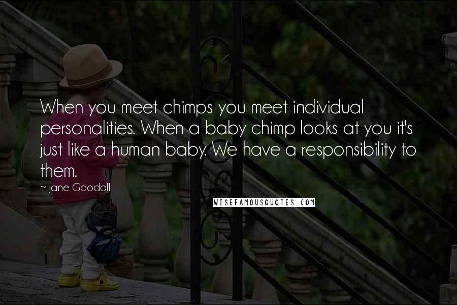 Jane Goodall quotes: When you meet chimps you meet individual personalities. When a baby chimp looks at you it's just like a human baby. We have a responsibility to them.