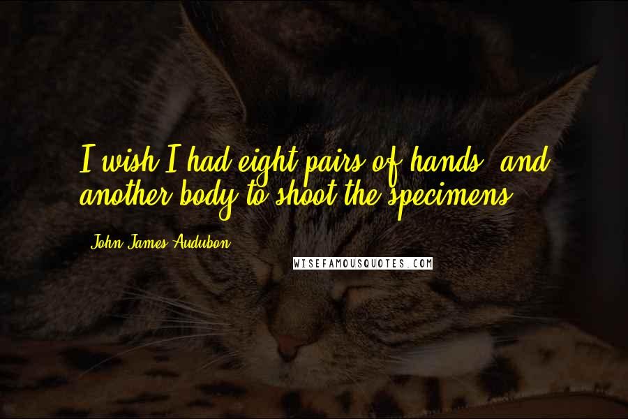 John James Audubon quotes: I wish I had eight pairs of hands, and another body to shoot the specimens.